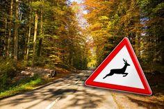Wernberg: Drei kaputte Autos und ein Verletzter bei Wildunfall