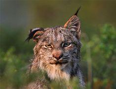 10+ animaux non photogéniques qui vous feront rire aux éclats