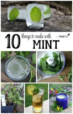 10 Things to Make With Mint - Mint is an easy to grow herb that cools and relieves pain. It can help ease stomachache, indigestion, headache, nausea and sore muscles. If you have ever grown mint in your garden, you are probably well aware of just how rapi Peppermint Herb, Peppermint Plants, Healing Herbs, Medicinal Herbs, Mint Plant Uses, Uses For Mint Leaves, Mint Leaves Recipe, Fresh Mint Leaves, Types Of Herbs