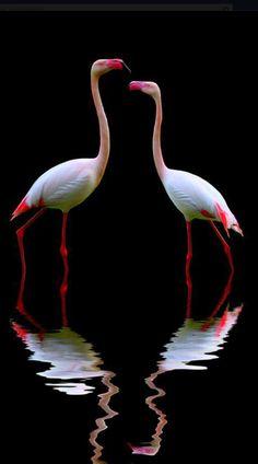 Beautiful flamingos ✿⊱╮