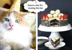 Happy Birthday Crazy Lady, Happy Birthday In Heaven, Today Is Your Birthday, Happy Birthday Vintage, Cat Birthday Memes, Happy Birthday Meme, Birthday Cats, Birthday Wishes, Happy Birthday Fireworks