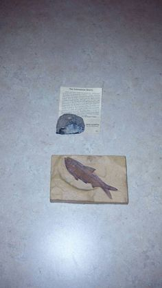 Check out this item in my Etsy shop https://www.etsy.com/listing/215236540/fish-fossil-and-historic-yellowstone