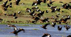 Festival en Parque Nacional Palo Verde festeja regreso de 44 especies | La Voz de Guanacaste