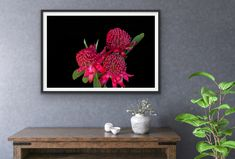 Waratah flowers are so beautiful to photograph.