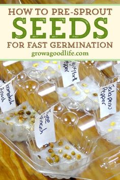 Pre-sprouting seeds germinates seeds before planting. This saves time, eliminate… Pre-sprouting seeds germinates seeds before planting. This saves time, eliminates Organic Horticulture, Organic Gardening, Gardening Tips, Container Gardening, Flower Gardening, Indoor Gardening, Texas Gardening, Garden Seeds, Planting Seeds