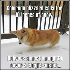 Almost Enough to Cover a Corgi's Ankles: the Great Colorado Non-Blizzard of 2013. By Beano of 999thepoint.com
