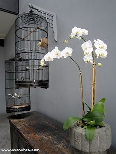 Lovely White Orchid
