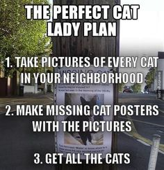 The perfect cat lady plan. http://mbinge.co/1zuVkkA