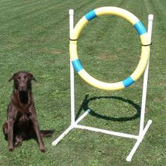 Practice Tire Jump: where to buy agility course equipment for dogs. Dog Training Books, Agility Training For Dogs, Dog Agility, Dog Training Tips, Dog Playground, Dog Hacks, Therapy Dogs, Dog Care, Dog Toys