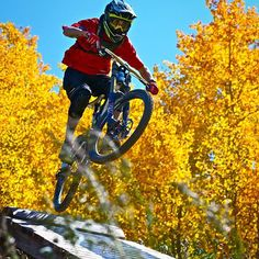 Fall mtb shred! Riding through bright yellow aspen tunnels is an amazing joy in the fall. Try not to get too distracted when riding though.  @eliotrosenberg shredding timetable @skicrestedbutte last fall. #fall #foliage #cbcolors #yellowtrees #mtb #dhmtb #dropping @mtbhome