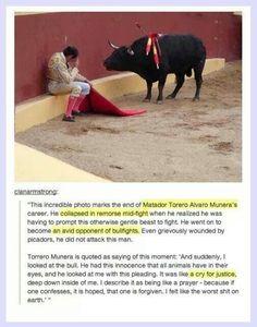 This guy is my hero<3 We need to stop bullfighting