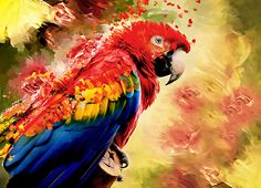 Great mixed media of a parrot (macaw) shaking himself - love the capture of movement, plus the lovely colors of a gorgeous bird!