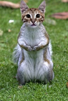 смешные скрещенные животные: 13 тыс изображений найдено в Яндекс.Картинках