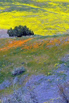 """""""Nature's Tapestry"""" - photo by Graham Owen; California wildflowers paint the landscape with vibrant colors in San Luis Obispo County."""