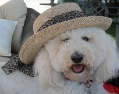 I love our Fur Babies, and I bet you love yours too.  They are a gift to us all.  This is my 'Happy Doodle Dandy', our labradoddle