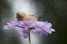 Simply Snail by Jacky Parker
