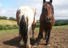 Horse & Pony Trekking Picturesque trails through a working farm environment and beautiful surrounding countryside, catering for all levels of experience. Trekking, Countryside, Catering, Ireland, Pony, Trail, Environment, Horses, Activities
