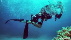 One of the photographer's working on getting pictures for people visiting the great barrier reef.. #greatbarrierreef #greatbarrier #australia #seeaustralia #perthisok #perth #queensland #cairns #portdouglas #goprohero4 #gopro #marine #natgeo #scubadiving #scuba #diving #freediving #wondrousblue #uwphotography #underwaterphotography #clownfish #anemone #pinkanemonefish #nemo #findingnemo #photographer by wondrousblue http://ift.tt/1UokkV2