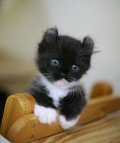 This little fella is just tooooo cute!