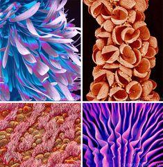 Susumu Nishinaga electron microscope photography