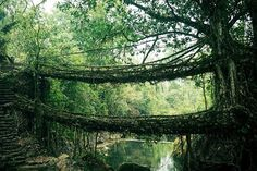 As raízes das árvores formam essa ponte na Índia