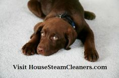What is it about your pet that brings on allergies? Find out how steam cleaning your home can give you natural allergy relief.  Visit us today!