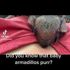 Funny Animal Videos, Cute Funny Animals, Cute Baby Animals, Funny Cute, Live Animals, Nature Animals, Animals And Pets, Unusual Animals, Animals Beautiful