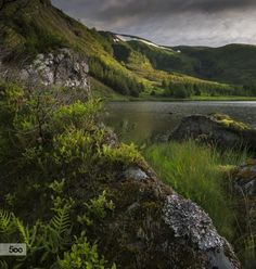 //MOSQUITO HEAVEN! by Gaute  Hatlem on 500px