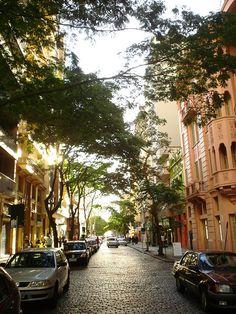 tree-lined street in porto alrege, brazil