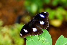 Tours of the Merlin Butterfly Sanctuary are available every Monday, Wednesday and Fridays at am. Children and adults can learn about the butterfly life-cycle and see many species. Family Friendly Resorts, Butterfly Life Cycle, Phuket, Resort Spa, Merlin, The Locals, Wednesday, Tours, Vacation