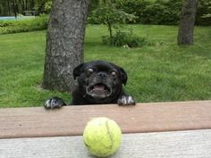 A dog who can't even handle this tennis ball.   41 Pictures You Need To See Before The Universe Ends