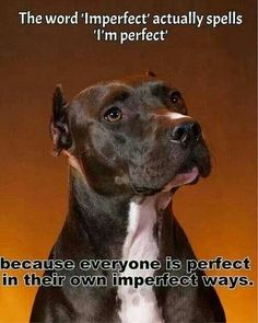 My pittie is perfectly imperfect!
