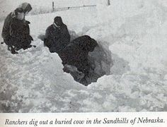 "Roads were blocked, schools were closed, snow drifted over rooftops, and cattle were stranded. Trains were forced to stop, and stranded travelers forced any available hotels into overflowing. The Weather Bureau (the precursor to the National Weather Service) called the storm, ""One of the most severe blizzards of record over much of the central and northeastern parts of the state."" Northeastern Nebraska received the worst of this first round of weather"