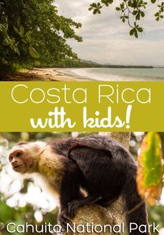 Visit Cahuita, Costa Rica with kids! You're guaranteed to see sloths and monkees at Cahuita National Park, and enjoy mellow beach days on the Caribbean coast. Definitely a great choice for your next family vacation!