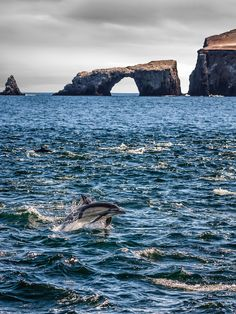 Arch Rock and Dolphin, Channel Islands National Park, California by Greg Clure Places To Travel, Places To See, Travel Destinations, Channel Islands National Park, Us National Parks, California Dreamin', Death Valley, Dolphins, Alaska