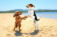 ♪ Let's dance!! ♫ #cute #animals