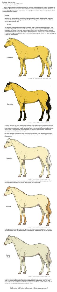 Equine Genetics Guide: Part 3 by ~daughterofthestars