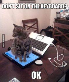 Ideas Memes Graciosos Humor Grumpy Cat For 2019 Funniest Cat Memes, Funny Cat Compilation, Funny Cat Videos, Funny Animal Memes, Funny Animal Pictures, Funny Animals, Cute Animals, Funny Memes, Memes Humor
