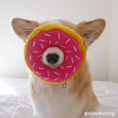 Donut give me that look