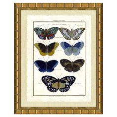 $140 I pinned this Butterfly Collection II Framed Print from the Vintage Print event at Joss and Main!