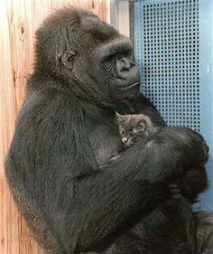 Koko and Kitten