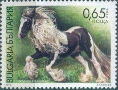 Tinker (Equus ferus caballus)