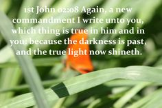 62_1JO_02_08 Again, a new commandment I write unto you, which thing is true in him and in you: because the darkness is past, and the true light now shineth.                                                                                                   www.eBibleProductions.com