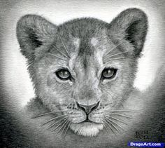 sketching bear cubs | how to draw a lion cub, lion cubs