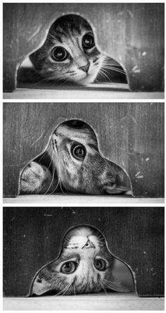 Впустите меня! Ну, впуститееее....