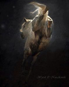 Awesome (U definitely don't see a horse from this angle, very often... very original!) J
