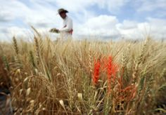 Researchers say that rising greenhouse gas levels could make your food less nutritious