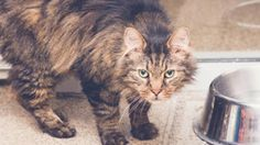 Cats make great companions and they can live a long life with just a few simple health tips from the Humane Society of the Tennessee Valley.