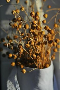 harvest in sunlight