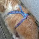 Hund: Geschirr - Paracord Führgeschirr , Stars n Stripes - ein Designerstück von Pfotenschmiede bei DaWanda